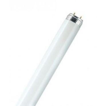 Sylvania Fluorbuis TLD TL8 15W Vliegenlamp F15W 437.4Mm Thoughcoat